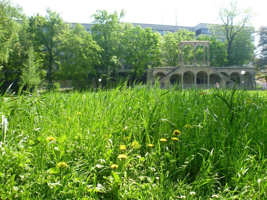 Schlossgarten Stuttgart ohne Schwan