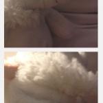 Eisbär-Stofftier Poldi als Passbild-Streifen